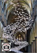 Alan-Cooke-Salisbury-Doves-of-Peace
