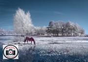 67-Alan-Price-Spring-at-Hatchet