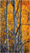 Ian-Park-Autumn-Drama