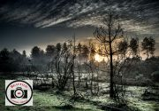 Alan-Price-Burnt-Gorse--Sunrise-Holbury-Inclosure