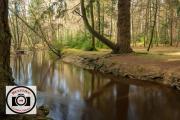 Bob-Abbott-Forest-Stream