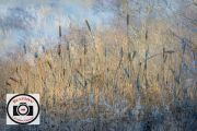Cathryn-Baldock-Winter-Rushes-By