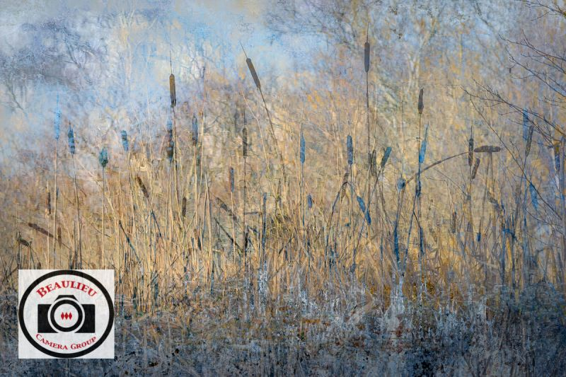 Cathryn-Baldock-Winter-Rushes-By-2