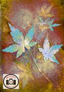 Cathryn-Baldock-Acer-Leaves-10