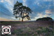 Maggie-White-Sunset-at-Pig-Bush-New-Forest-10