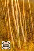 Rob-Snellgrove-Golden-Grass-10