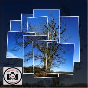 Rob-Snellgrove-Tree-Leaves