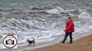 Sue-Dunham-LIttle-Dog-Big-Sea