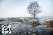 Sue-Dunham-Lone-Tree-Amid-Frost-and-Ice-2