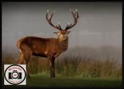 15-Pete-Smith-Red-Deer