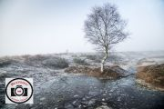 09-Sue-Dunham-Lone-Tree-Amid-Frost-and-Ice