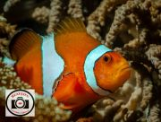 Neil-Hardy-Finding-Nemo